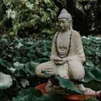 Communal Force in Cannabis Indi(c)a